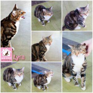*LYRA*