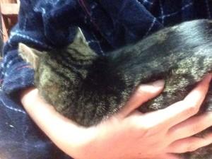 Sweetie Cuddles