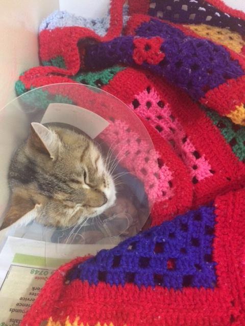 Madison Waking From Surgery