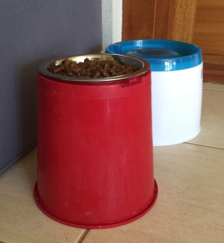 Raised Water and Food Bowls