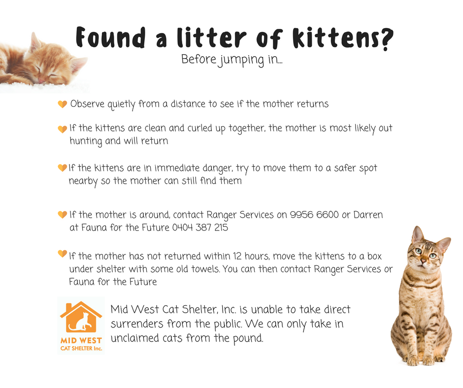 Found a litter of kittens?