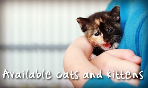 Ready to Adopt? Meet our available cats and kittens here