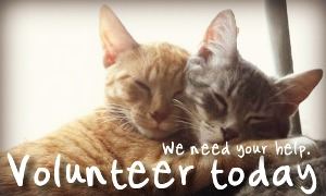 Volunteer with Mid West Cat Shelter