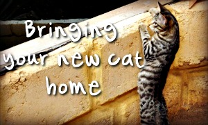 Tips for bringing home your new cat