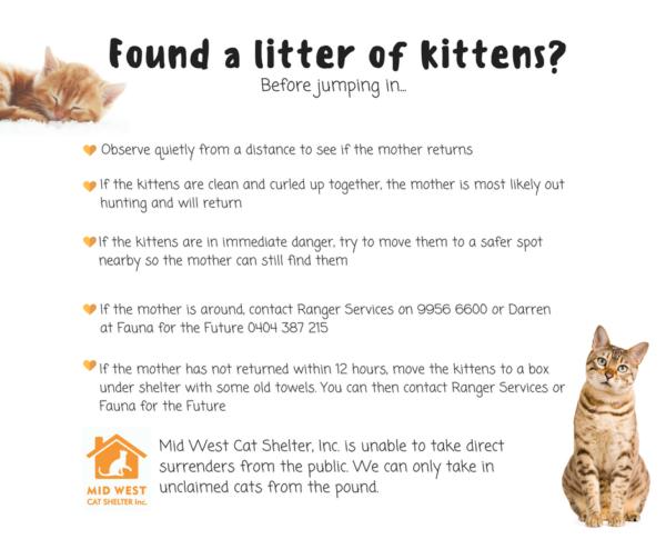 Found a litter of kittens?